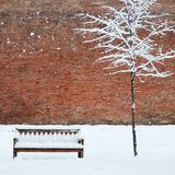 Bench and lonely tree covered by snow Stock Images