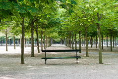 Bench in Luxembourg Gardens. A Bench in the Symmetrical Forest, Luxembourg Gardens, Paris Royalty Free Stock Image
