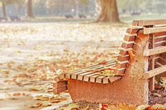 Bench and maple in city park in the autumn Stock Photography