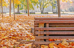 Bench and maple in city park in the autumn Stock Images