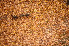Bench and maple leaves in city park in the autumn Royalty Free Stock Images