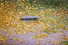 Bench and maple leaves in city park in the autumn Royalty Free Stock Photo