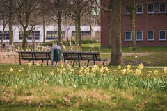 Bench Of Memories!. A view from empty benches beside flowers - March 2017, Groningen Netherlands Stock Photography