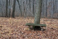 Bench in the middle of nowhere royalty free stock photography