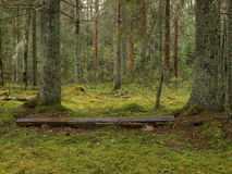 Bench in the middle of wilderness Royalty Free Stock Photography