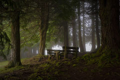 Bench in a misty forest Stock Images