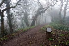 Bench Beside a Misty Path. Wooden bench beside a path in an eerie, misty wood stock photography