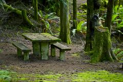 Bench in Mossy Forest Royalty Free Stock Image