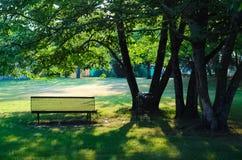 Bench na máscara de uma árvore em uma manhã ensolarada de junho Foto de Stock Royalty Free