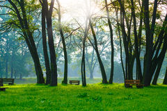 Bench in the natural Stock Image