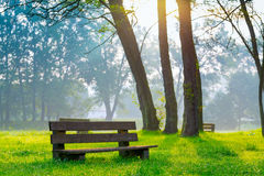 Bench in the natural park Stock Image