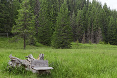 Bench near forest. Small bench on side of pine tree forest Royalty Free Stock Photography