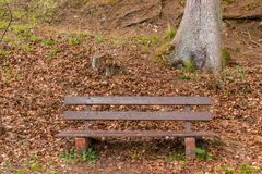 Bench near the lake to take a rest.  Stock Photo