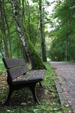 Bench near path Royalty Free Stock Photography