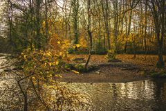 Bench near the river in a autumn landscape fall melancholic royalty free stock images