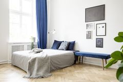 Bench next to bed with grey blanket in bright bedroom interior with posters and blue drapes. Real photo. Concept stock photos