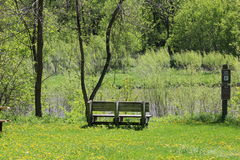 Bench next to river. Wooden bench looking over the river Royalty Free Stock Image