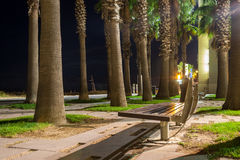 Bench in the night. Bench and palms in the night Royalty Free Stock Photos