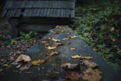 Bench no parque, exterior, chuva, outono imagem de stock royalty free