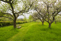 Bench in orchard garden. Wooden bench in orchard garden in spring Stock Photo