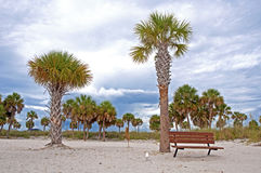 Bench and palm trees at a beach Royalty Free Stock Photography