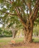 Bench, Paperbark Tree, Jalunbu Park, Port Douglas, QLD, Australia Royalty Free Stock Photography