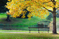 Bench  in park. Empty bench in park, under yellow tree, near pond Stock Photography