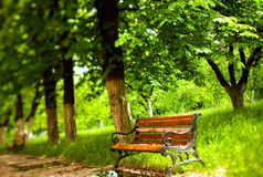 Bench in a park. The trees are out of focus Royalty Free Stock Photos