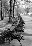 Bench in park. Black and white image with some empty bench in Cismigiu park, Bucharest Stock Photos