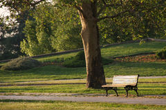 Bench in the park. Under the tree Royalty Free Stock Photography