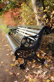 A bench in the park. A bench in autumn in a London park Royalty Free Stock Images