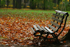 Bench and park Stock Photography