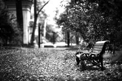 A bench in the Park. Botanical Garden. Moscow Stock Photo