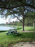Bench in the park. With lake in the background. City buildings visible Royalty Free Stock Photos