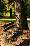 Bench in park Stock Images