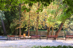 Bench and park Royalty Free Stock Photography