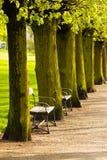 Bench in a park. Benches in a public park stock photos