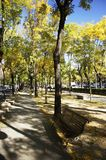 Bench in park. Bench in one of the parks in madrid Royalty Free Stock Images