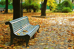 Bench in a park. And leaves Stock Photography