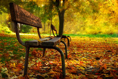 Bench in a park. And colorful leafs Royalty Free Stock Photo