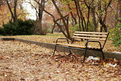 Bench in Park Stock Photo