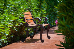 Bench in the park alley. Bench in the green park alley royalty free stock image