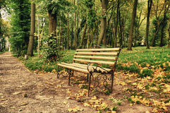 Bench in the park. Bench in the autumn park stock photography