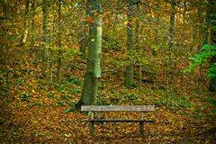 Bench in Park during Autumn Royalty Free Stock Photos