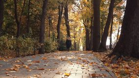 Bench in the park. Autumn daytime. Smooth dolly shot. Bench in the park. Autumn daytime. Smooth dolly shot stock video