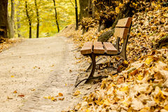 Bench in the park autumn Stock Image