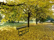 The leaves in autumn in the park royalty free stock photos