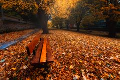 Bench in park on autumn with leaves. On the ground royalty free stock photos