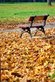 Bench in the park in autumn. With many fallen leaves on the ground Royalty Free Stock Image
