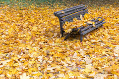 Bench in the park in autumn season Royalty Free Stock Photos